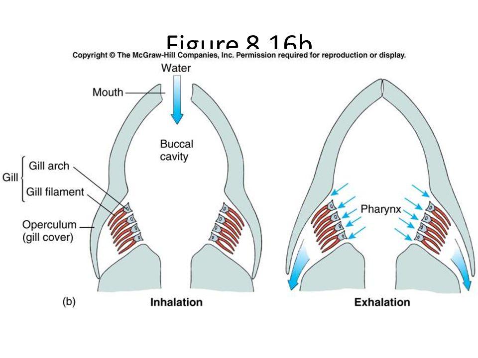 Figure 8.16b