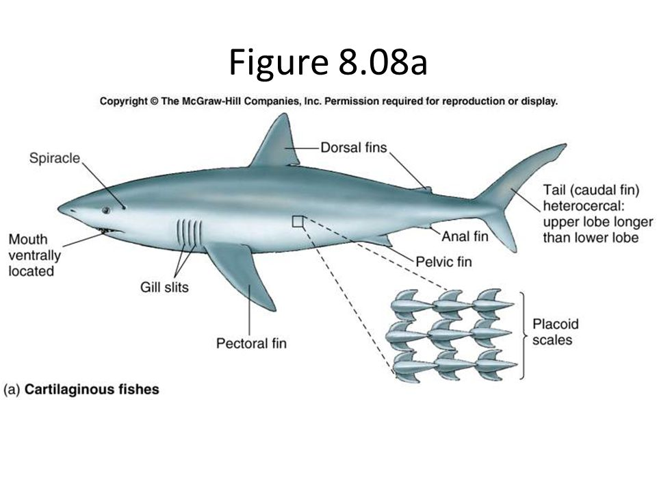 Figure 8.08a