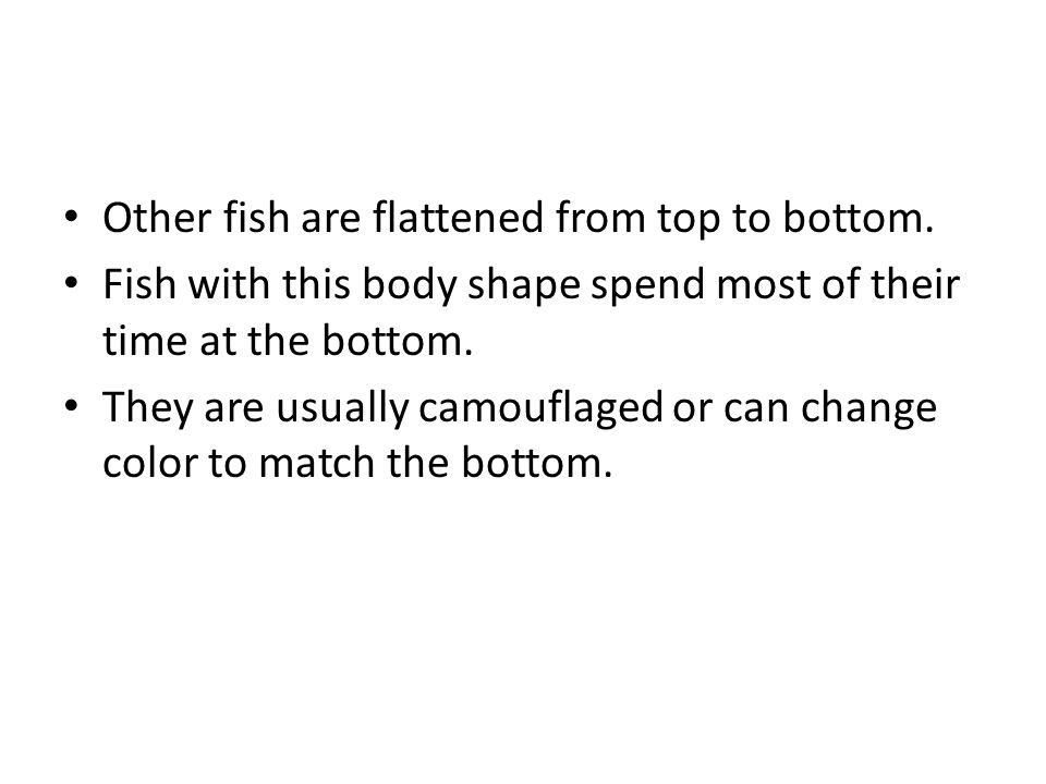 Other fish are flattened from top to bottom. Fish with this body shape spend most of their time at the bottom. They are usually camouflaged or can cha