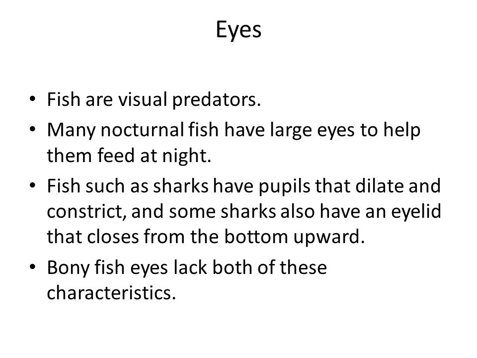 Eyes Fish are visual predators. Many nocturnal fish have large eyes to help them feed at night. Fish such as sharks have pupils that dilate and constr
