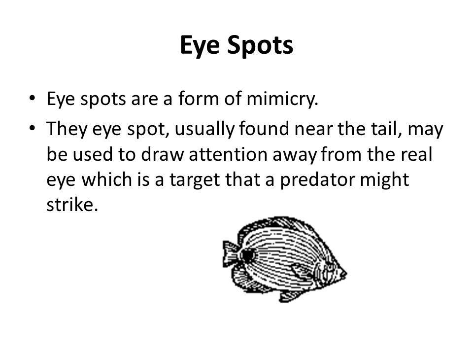 Eye Spots Eye spots are a form of mimicry. They eye spot, usually found near the tail, may be used to draw attention away from the real eye which is a