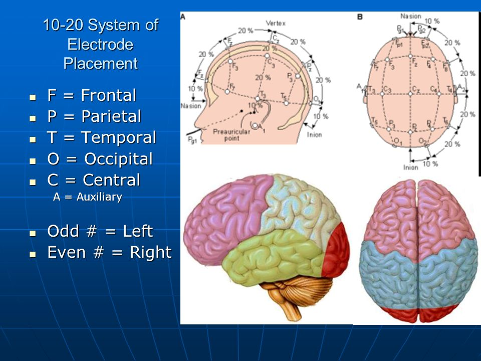 10-20 System of Electrode Placement F = Frontal F = Frontal P = Parietal P = Parietal T = Temporal T = Temporal O = Occipital O = Occipital C = Centra