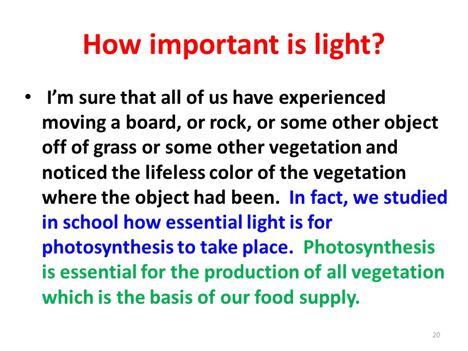 How important is light? Im sure that all of us have experienced moving a board, or rock, or some other object off of grass or some other vegetation an