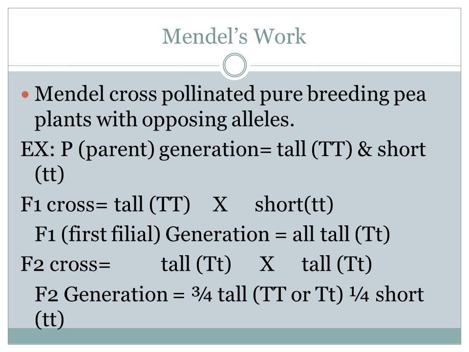 Mendels Work Mendel cross pollinated pure breeding pea plants with opposing alleles. EX: P (parent) generation= tall (TT) & short (tt) F1 cross=tall (