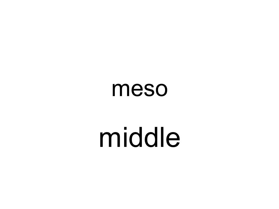 meso middle