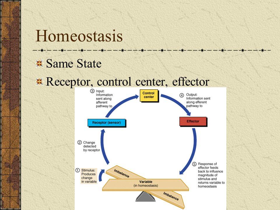 Homeostasis Same State Receptor, control center, effector