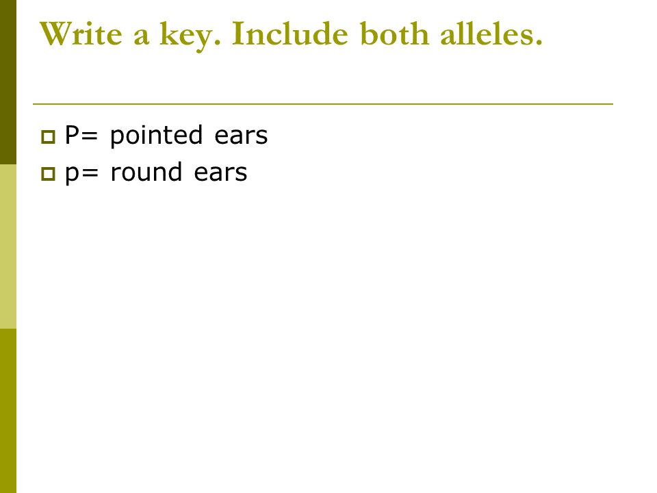 Write a key. Include both alleles. P= pointed ears p= round ears