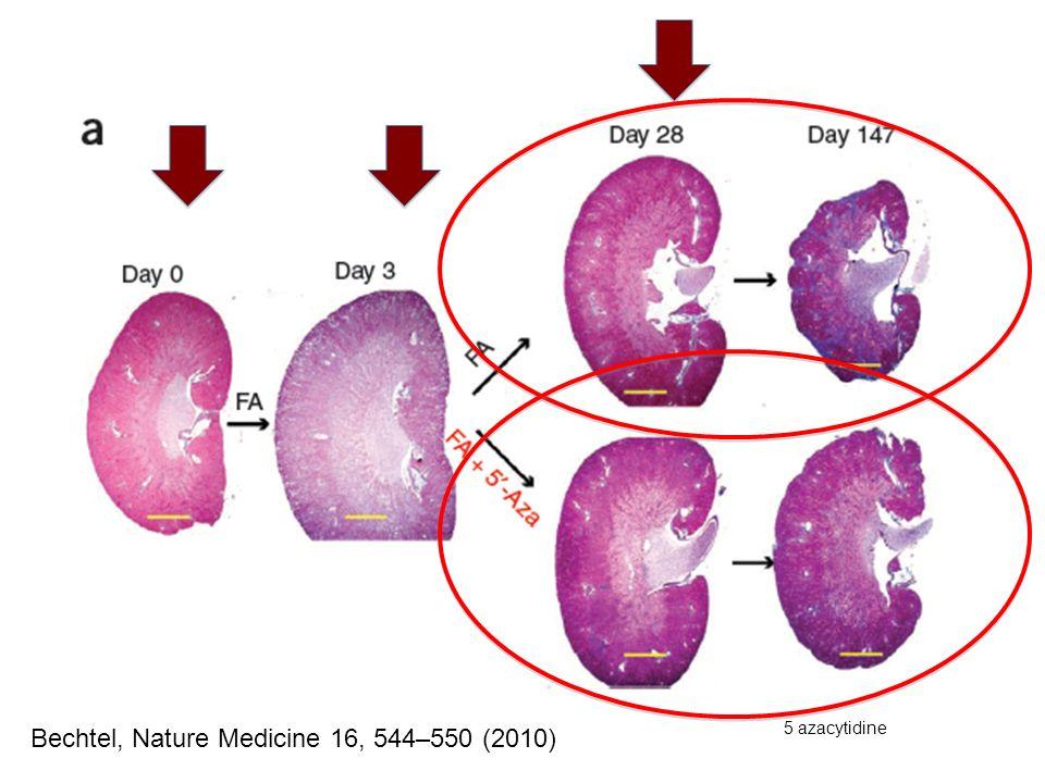 Bechtel, Nature Medicine 16, 544–550 (2010) 5 azacytidine
