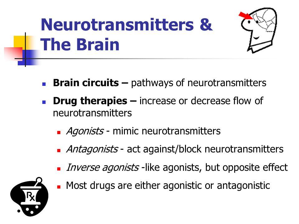Neurotransmitters & The Brain Brain circuits – pathways of neurotransmitters Drug therapies – increase or decrease flow of neurotransmitters Agonists