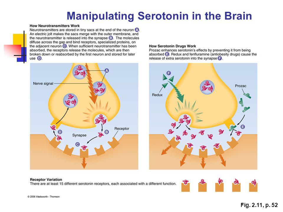 Manipulating Serotonin in the Brain Fig. 2.11, p. 52