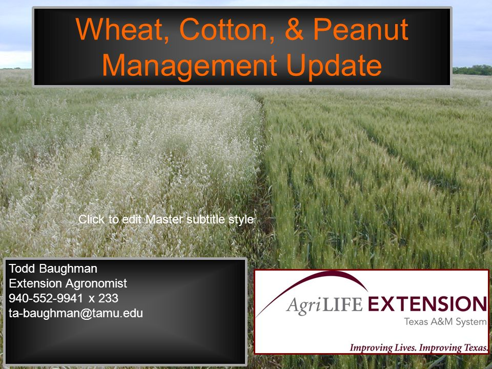 Click to edit Master subtitle style Wheat, Cotton, & Peanut Management Update Todd Baughman Extension Agronomist 940-552-9941 x 233 ta-baughman@tamu.edu