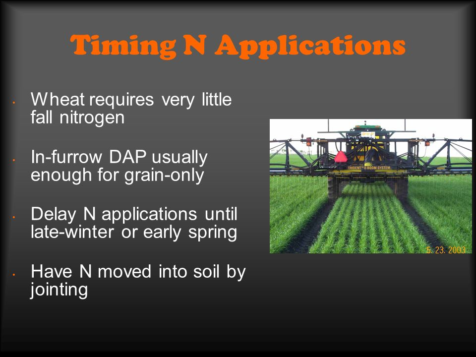 Timing N Applications Wheat requires very little fall nitrogen In-furrow DAP usually enough for grain-only Delay N applications until late-winter or early spring Have N moved into soil by jointing