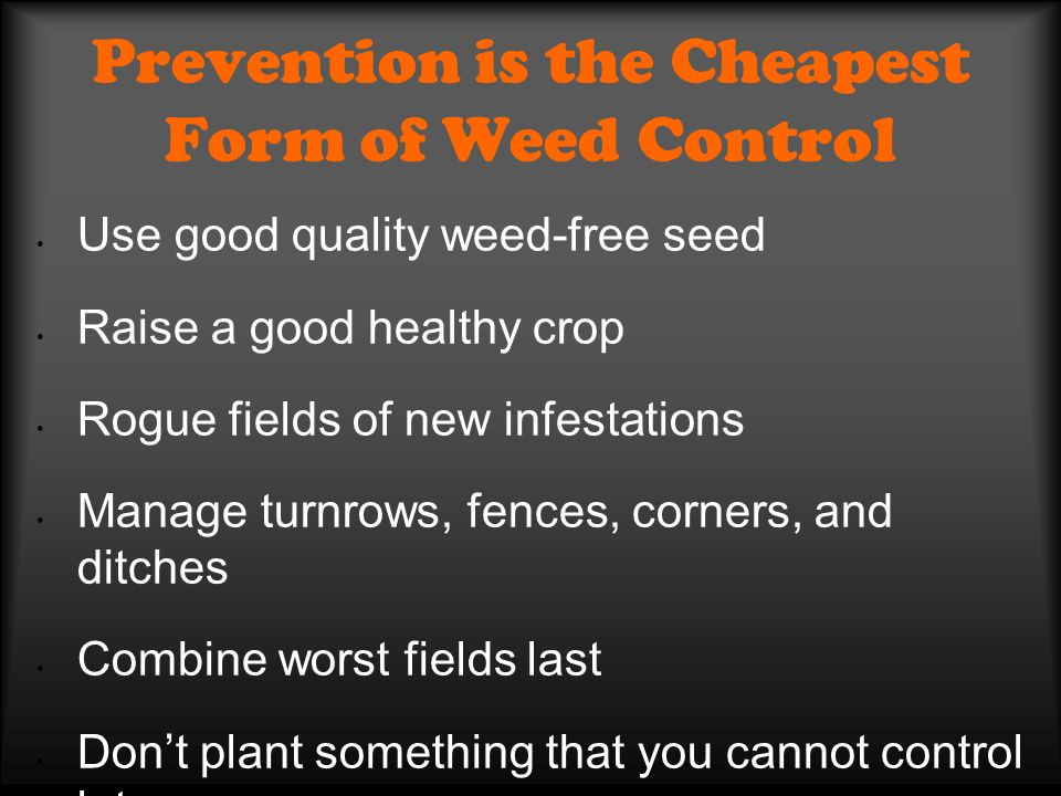 Prevention is the Cheapest Form of Weed Control Use good quality weed-free seed Raise a good healthy crop Rogue fields of new infestations Manage turnrows, fences, corners, and ditches Combine worst fields last Dont plant something that you cannot control later Crop rotation Graze out worst fields and control weeds with glyphosate