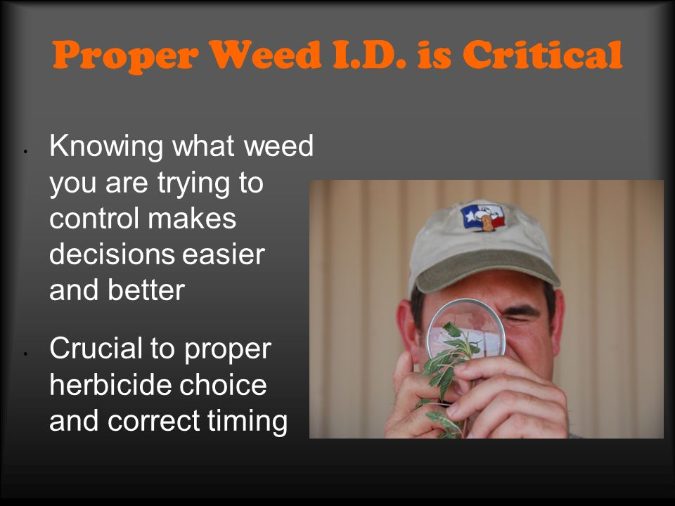 Proper Weed I.D. is Critical Knowing what weed you are trying to control makes decisions easier and better Crucial to proper herbicide choice and corr