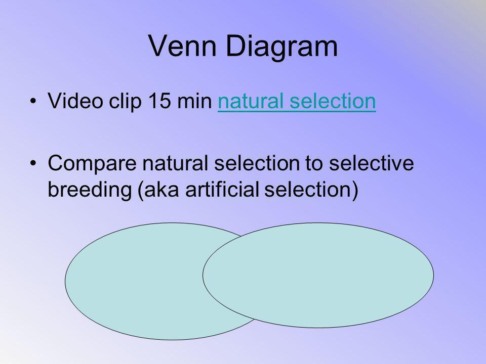 Venn Diagram Video clip 15 min natural selectionnatural selection Compare natural selection to selective breeding (aka artificial selection)