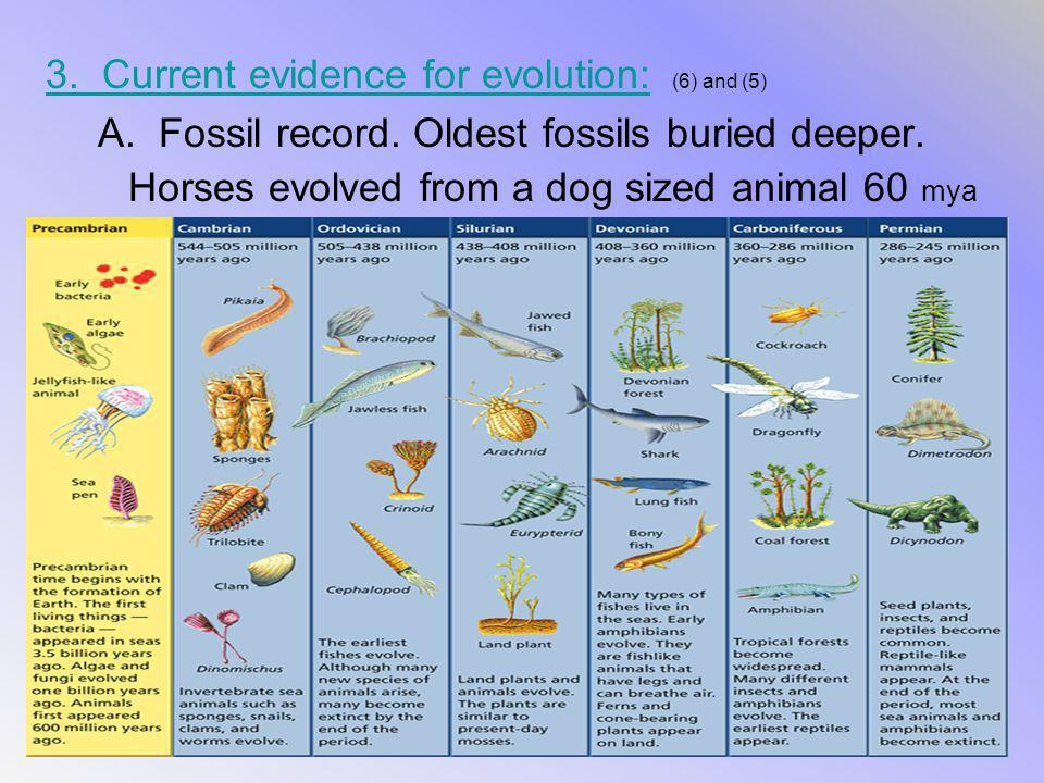 3. Current evidence for evolution: 3. Current evidence for evolution: (6) and (5) A. Fossil record. Oldest fossils buried deeper. Horses evolved from