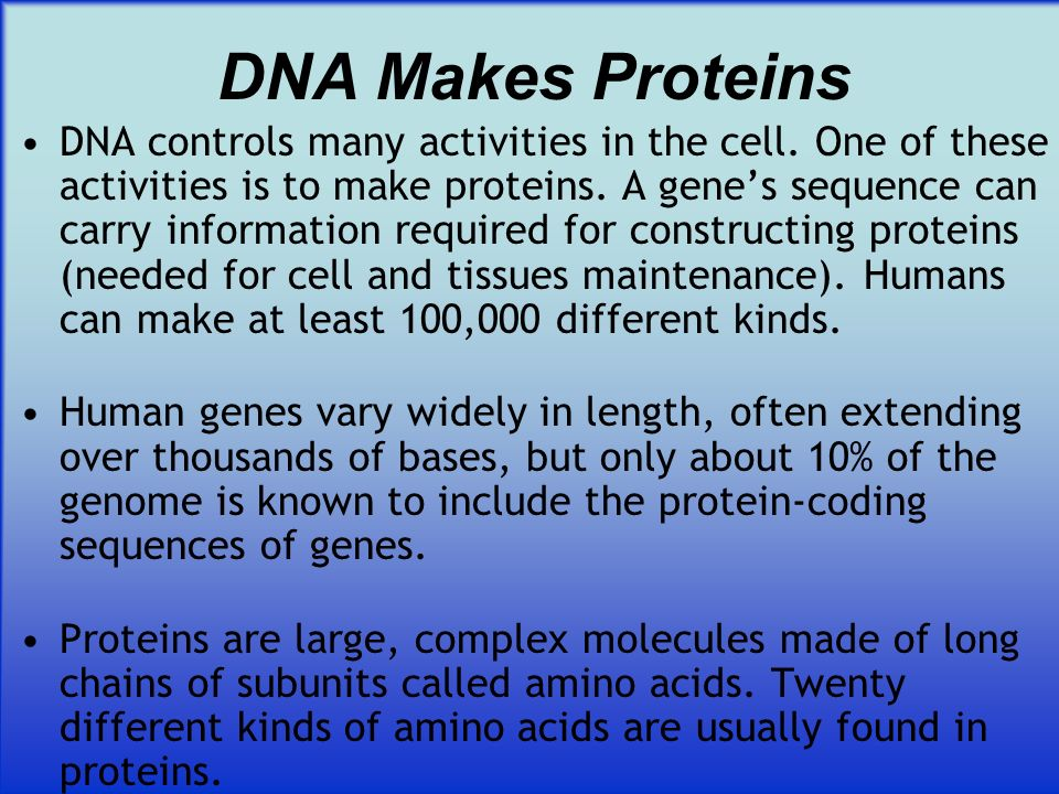 DNA Makes Proteins DNA controls many activities in the cell. One of these activities is to make proteins. A genes sequence can carry information requi