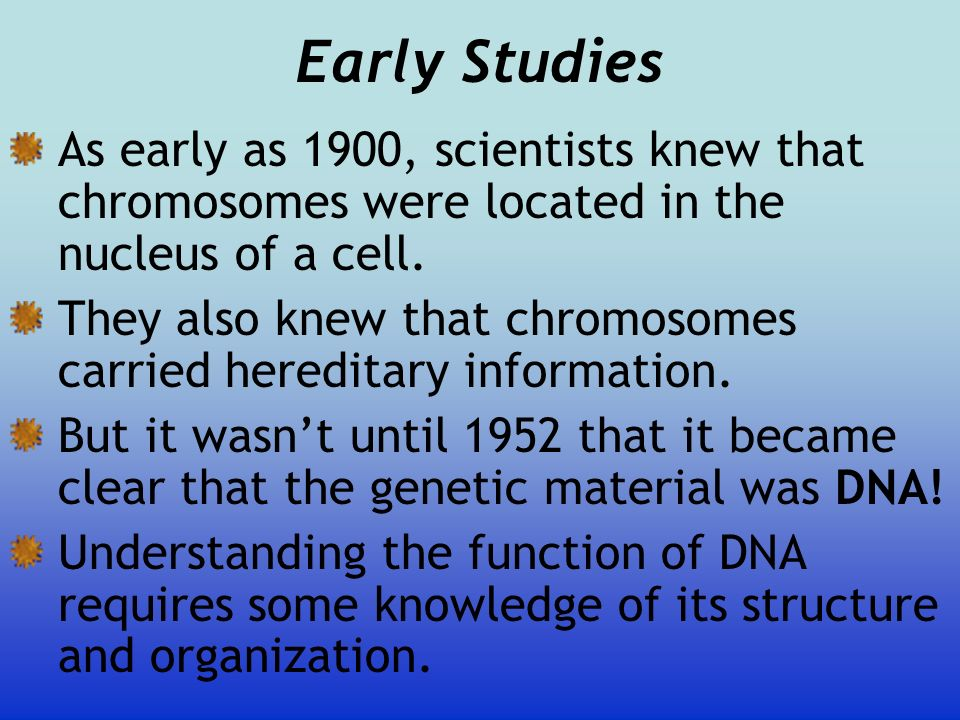 Early Studies As early as 1900, scientists knew that chromosomes were located in the nucleus of a cell. They also knew that chromosomes carried heredi