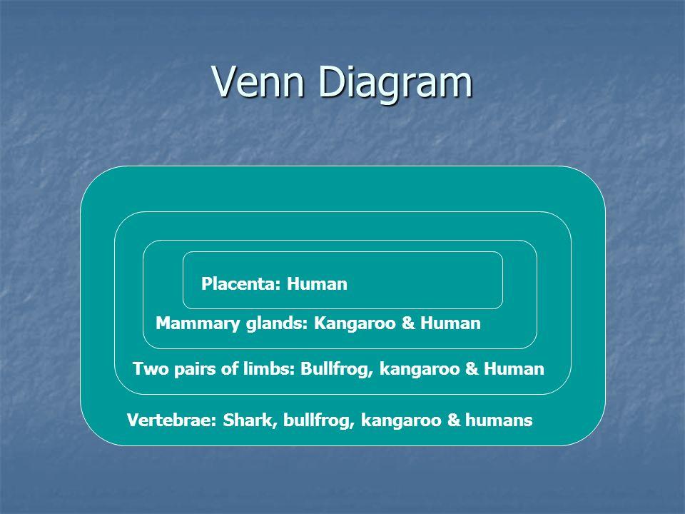 Venn Diagram Vertebrae: Shark, bullfrog, kangaroo & humans Two pairs of limbs: Bullfrog, kangaroo & Human Mammary glands: Kangaroo & Human Placenta: H