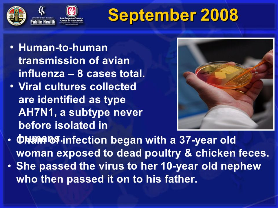 September 2008 Chain of infection began with a 37-year old woman exposed to dead poultry & chicken feces. She passed the virus to her 10-year old neph