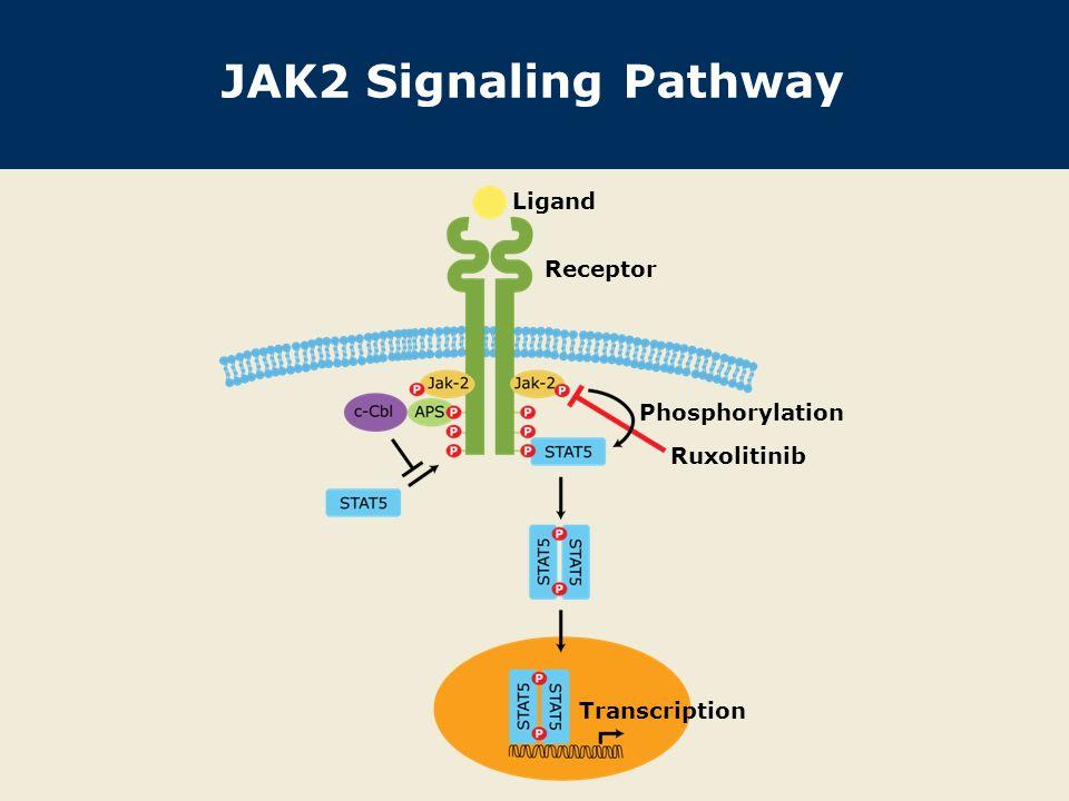 JAK2 Signaling Pathway Ruxolitinib Ligand Receptor Transcription Phosphorylation
