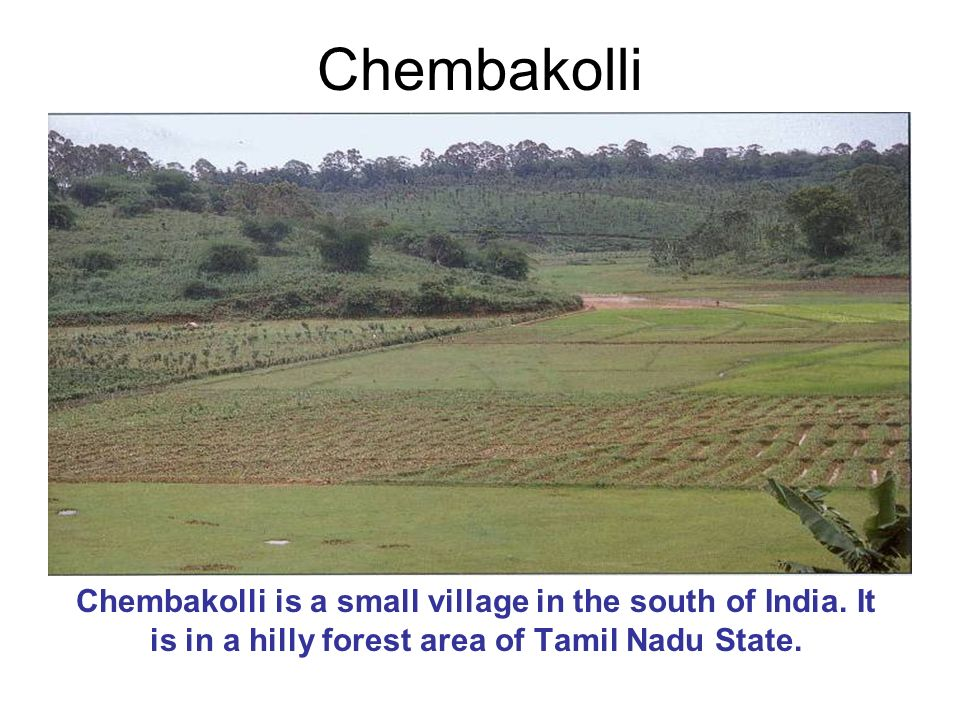 Chembakolli is a small village in the south of India. It is in a hilly forest area of Tamil Nadu State.