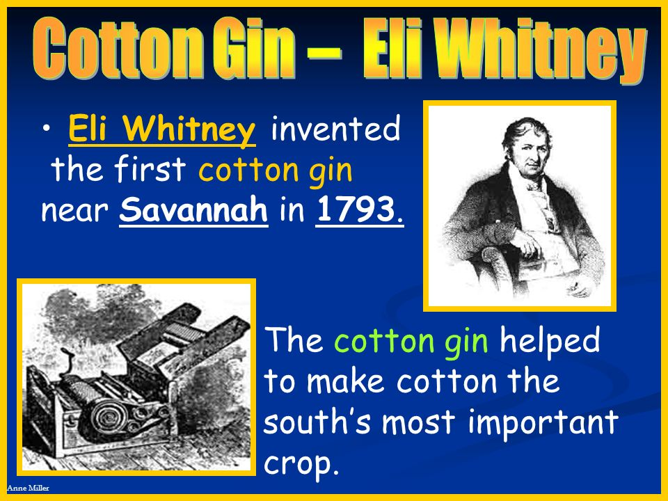 Anne Miller Eli Whitney invented the first cotton gin near Savannah in 1793. The cotton gin helped to make cotton the souths most important crop.