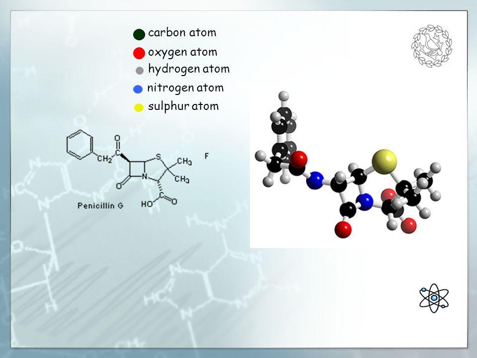 carbon atom oxygen atom hydrogen atom nitrogen atom sulphur atom