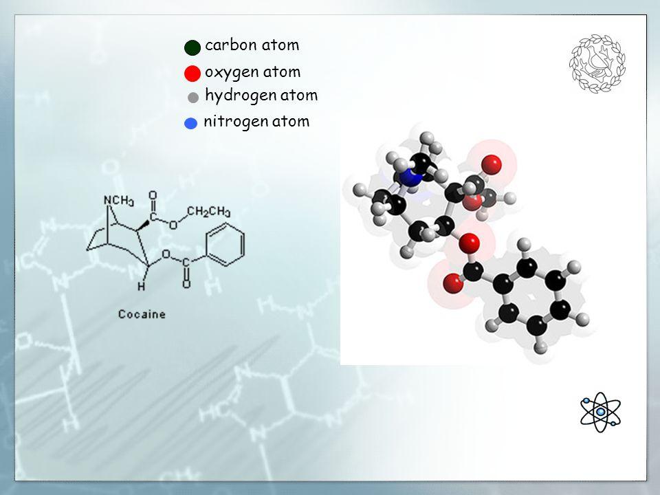carbon atom oxygen atom hydrogen atom nitrogen atom