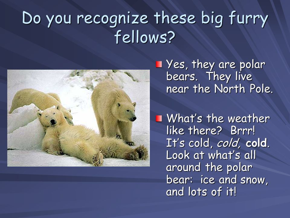 Do you recognize these big furry fellows? Yes, they are polar bears. They live near the North Pole. Whats the weather like there? Brrr! Its cold, cold
