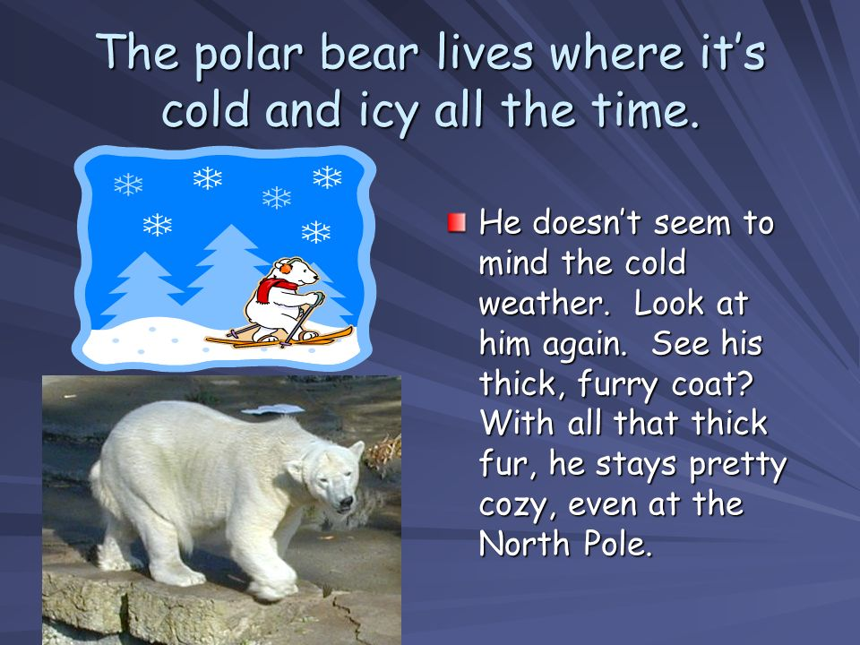 Now, imagine that the polar bear goes on vacation… Of course, you and I know that bears dont take vacations, but lets pretend.