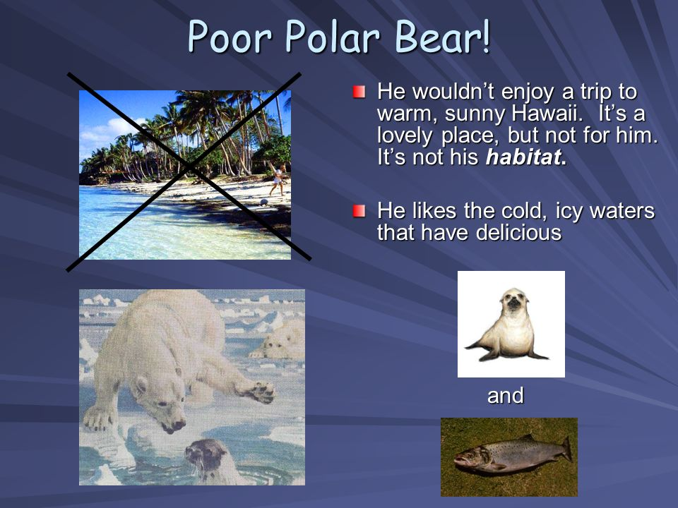 Poor Polar Bear! He wouldnt enjoy a trip to warm, sunny Hawaii. Its a lovely place, but not for him. Its not his habitat. He likes the cold, icy water