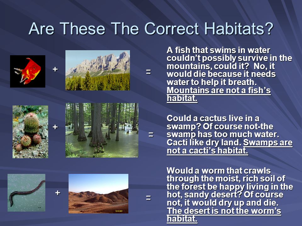 Are These The Correct Habitats? A fish that swims in water couldnt possibly survive in the mountains, could it? No, it would die because it needs wate