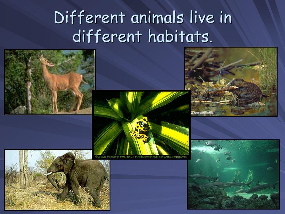 Different animals live in different habitats.