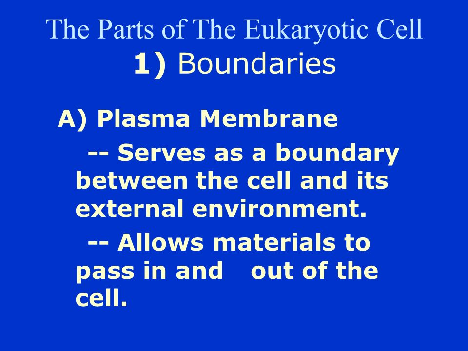Two Basic Cell Types 2) Eukaryote –Has several internal structures (organelles). –True nucleus. –Either unicellular or multicellular. unicellular exam