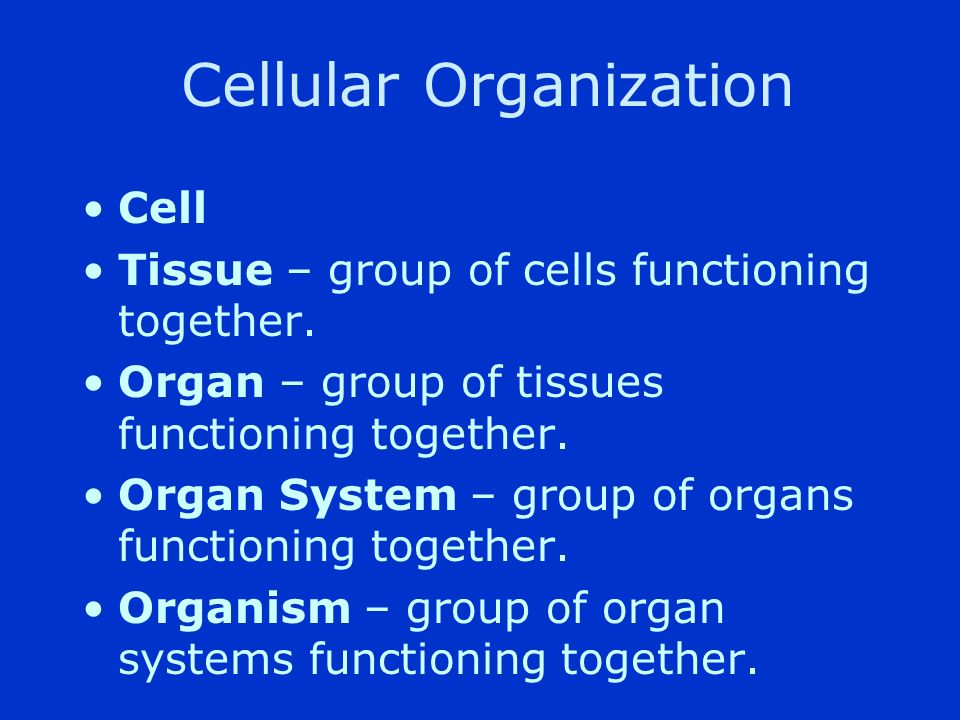 Chapter Seven A View of the Cell Free powerpoints at http://www.worldofteaching.comhttp://www.worldofteaching.com
