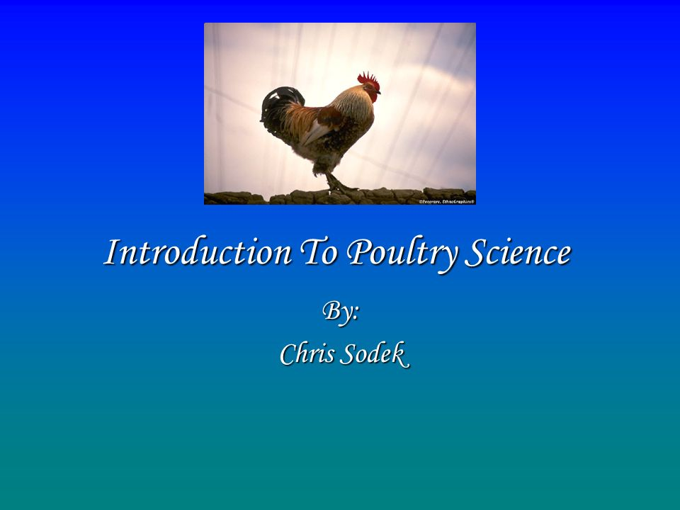 Introduction To Poultry Science By: Chris Sodek