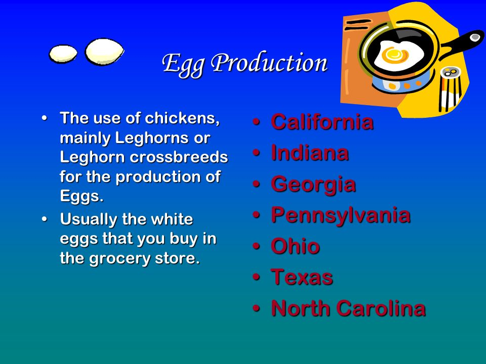 Egg Production The use of chickens, mainly Leghorns or Leghorn crossbreeds for the production of Eggs.The use of chickens, mainly Leghorns or Leghorn