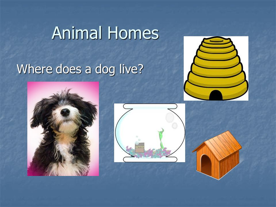 Animal Homes Where does a dog live
