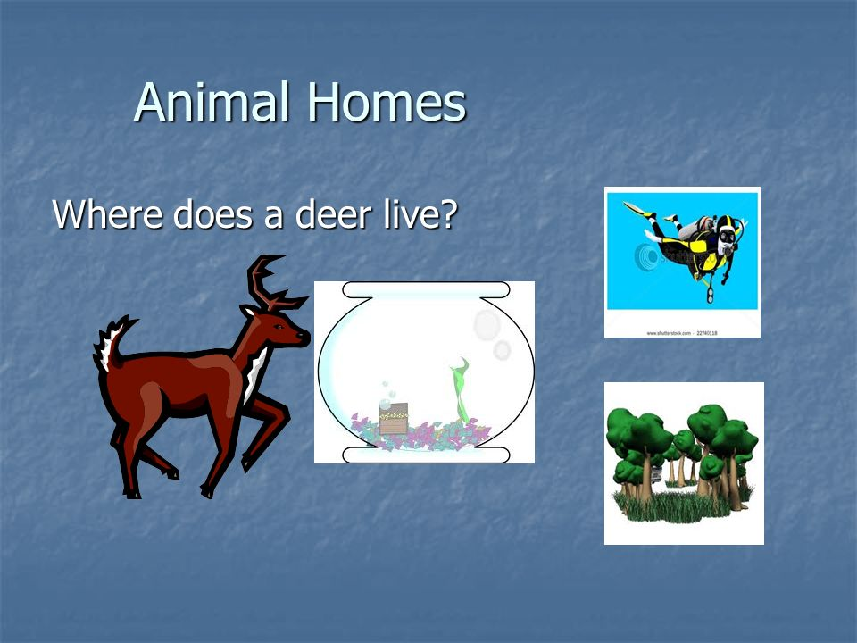 Animal Homes Where does a deer live