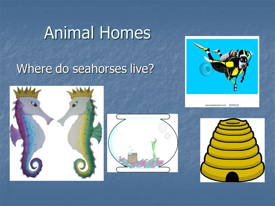 Animal Homes Where do seahorses live