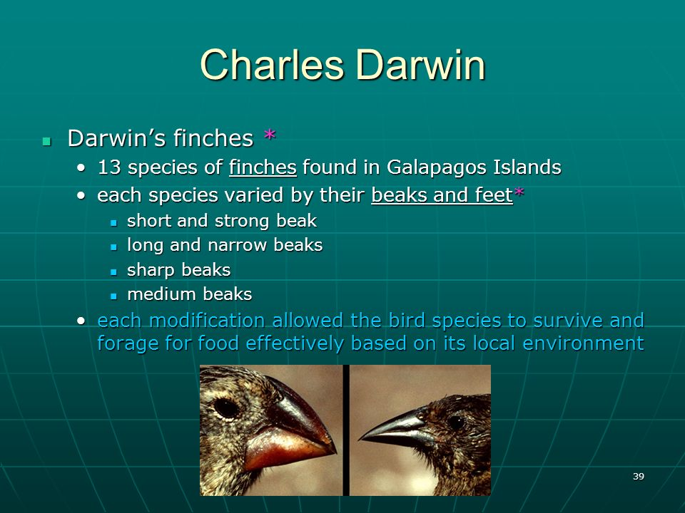 39 Charles Darwin Darwins finches * Darwins finches * 13 species of finches found in Galapagos Islands13 species of finches found in Galapagos Islands