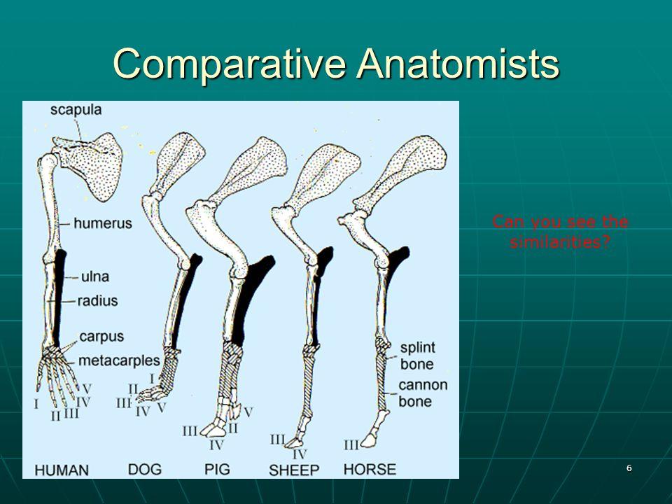 7 Comparative Anatomists