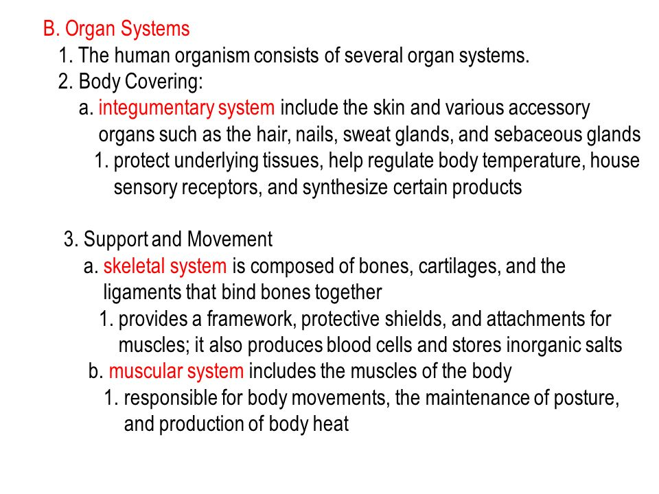 B. Organ Systems 1. The human organism consists of several organ systems. 2. Body Covering: a. integumentary system include the skin and various acces