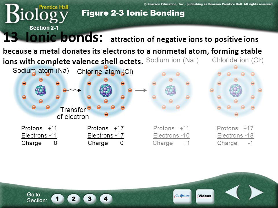 Go to Section: Sodium atom (Na) Chlorine atom (Cl) Sodium ion (Na + )Chloride ion (Cl - ) Transfer of electron Protons +11 Electrons -11 Charge 0 Protons +17 Electrons -17 Charge 0 Protons +11 Electrons -10 Charge +1 Protons +17 Electrons -18 Charge -1 Section 2-1 Figure 2-3 Ionic Bonding 13 Ionic bonds: attraction of negative ions to positive ions because a metal donates its electrons to a nonmetal atom, forming stable ions with complete valence shell octets.