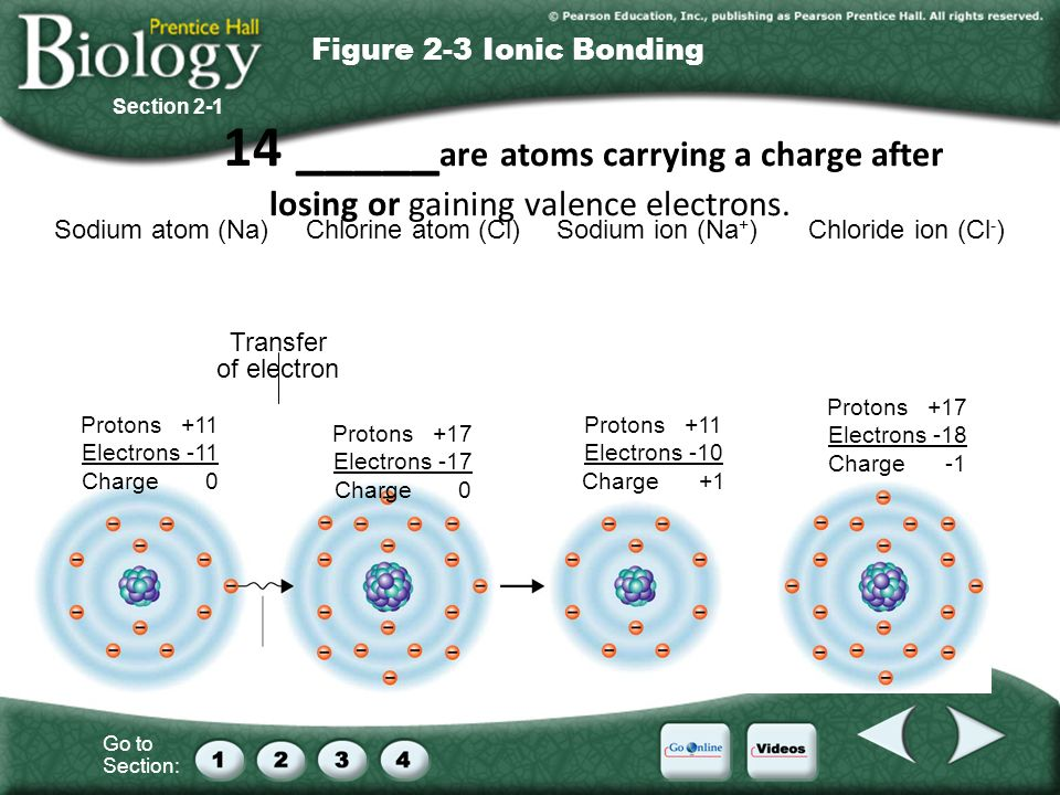 Go to Section: Sodium atom (Na)Chlorine atom (Cl)Sodium ion (Na + )Chloride ion (Cl - ) Transfer of electron Protons +11 Electrons -11 Charge 0 Protons +17 Electrons -17 Charge 0 Protons +11 Electrons -10 Charge +1 Protons +17 Electrons -18 Charge -1 Section 2-1 Figure 2-3 Ionic Bonding 14 _____ are atoms carrying a charge after losing or gaining valence electrons.