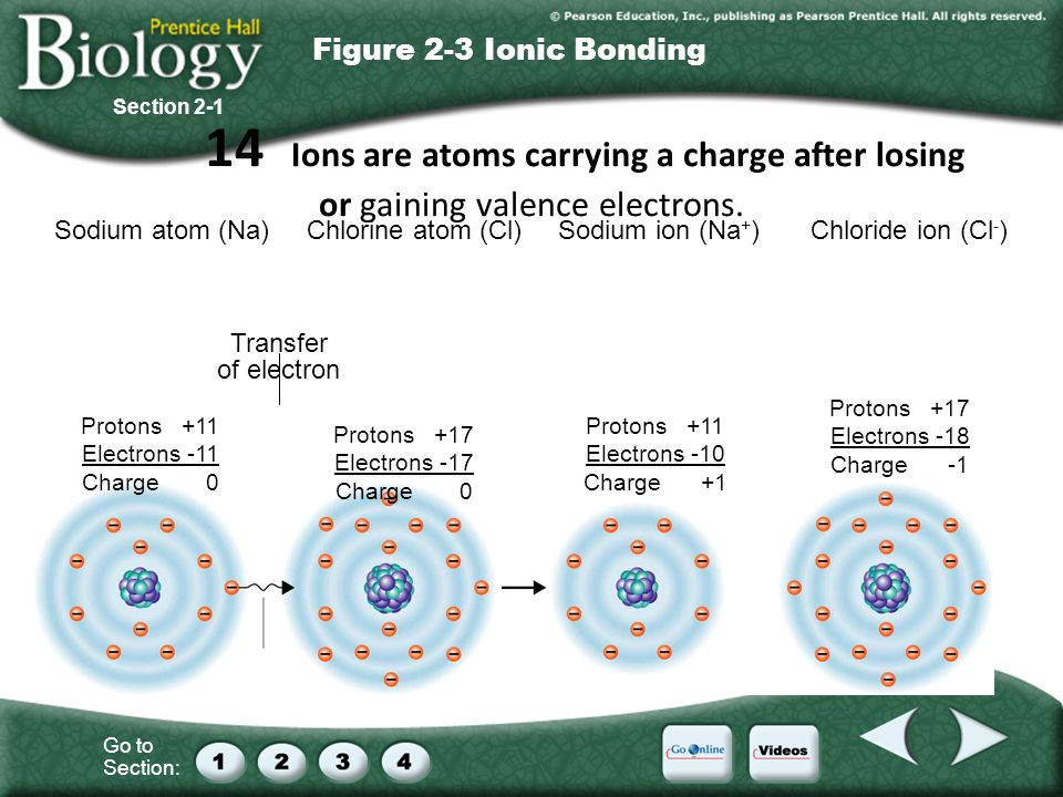 Go to Section: Sodium atom (Na)Chlorine atom (Cl)Sodium ion (Na + )Chloride ion (Cl - ) Transfer of electron Protons +11 Electrons -11 Charge 0 Protons +17 Electrons -17 Charge 0 Protons +11 Electrons -10 Charge +1 Protons +17 Electrons -18 Charge -1 Section 2-1 Figure 2-3 Ionic Bonding 14 Ions are atoms carrying a charge after losing or gaining valence electrons.