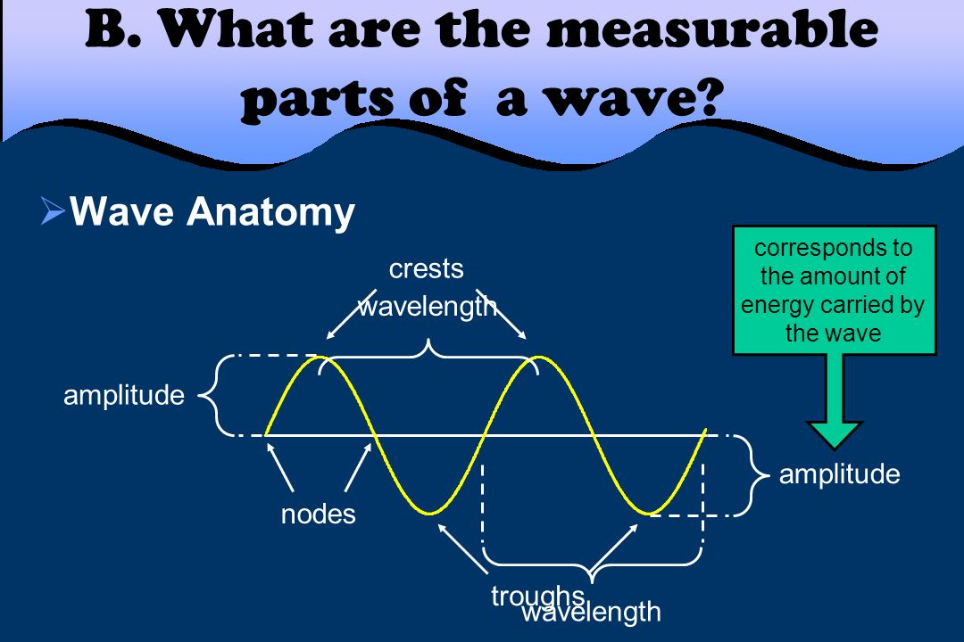 B. What are the measurable parts of a wave? Wave Anatomy crests troughs wavelength amplitude corresponds to the amount of energy carried by the wave n