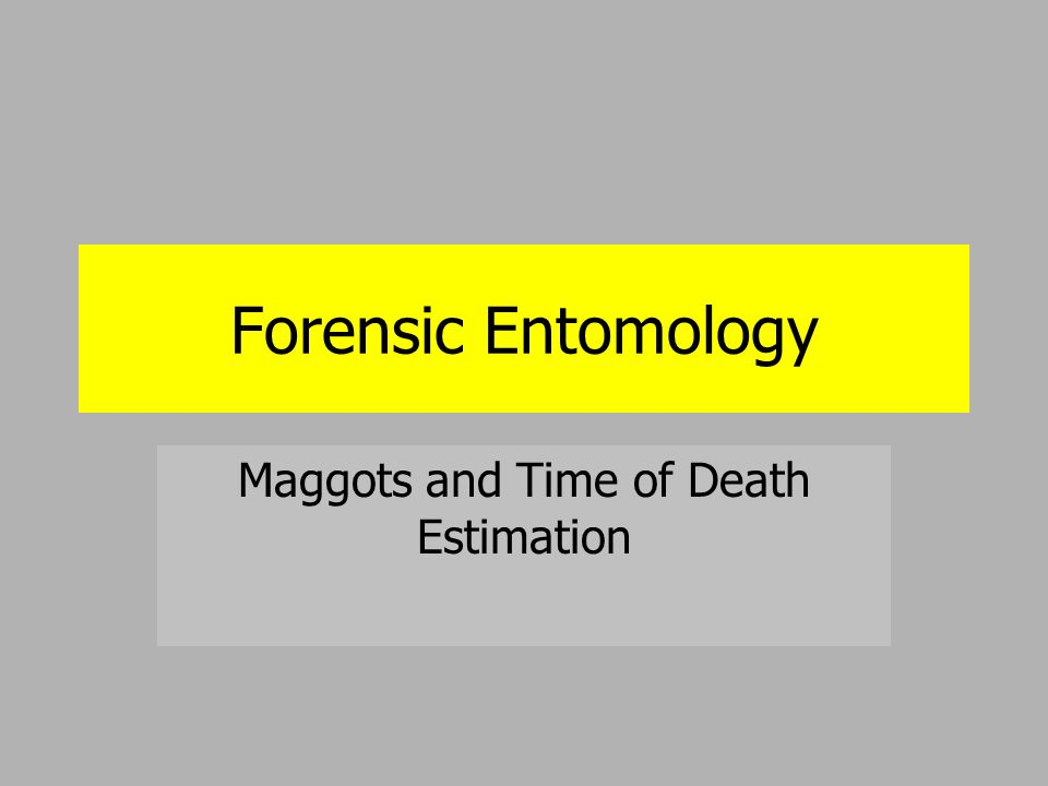 Forensic Entomology Maggots and Time of Death Estimation