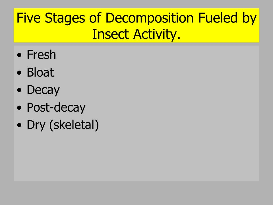 Five Stages of Decomposition Fueled by Insect Activity. Fresh Bloat Decay Post-decay Dry (skeletal)